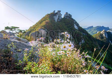 Flowers On Bukhansan Mountains, South Korea.
