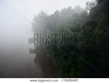 Deciduous forest by the riverside in strong fog