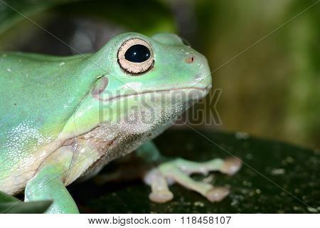 Colorful frog in a natural looking terrarium environment