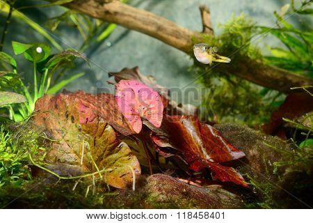 Natural aquarium representing tropical biotope. Underwater environment with various plants.
