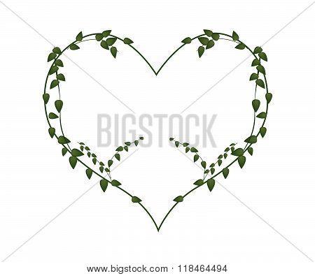 Fresh Vine Leaves In Lovely Heart Shape