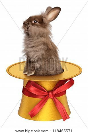 Funny Easter Bunny Climbing Out Of A Golden Top Hat