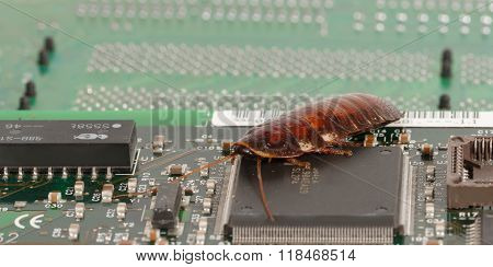 Cockroach On The  Computer Microcircuits. Concept Of Computer Bug