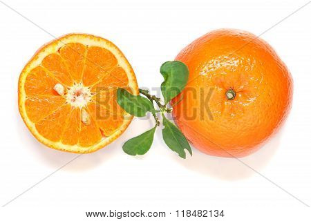 Slices of orange on white background, citrus fruit.