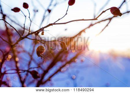 serene winter landscape with briar