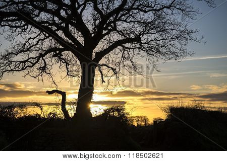 Tree silhouette at sunset, with cloudy sky, cornwall,uk