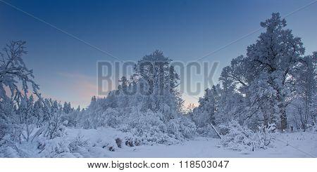 Winter evening in a Park in Leningrad region