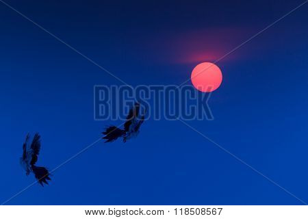 Flying Birds On Sunrise  Or Sunset On Blue Sky.