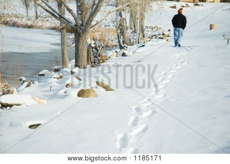 Fresh Trail By The Lake