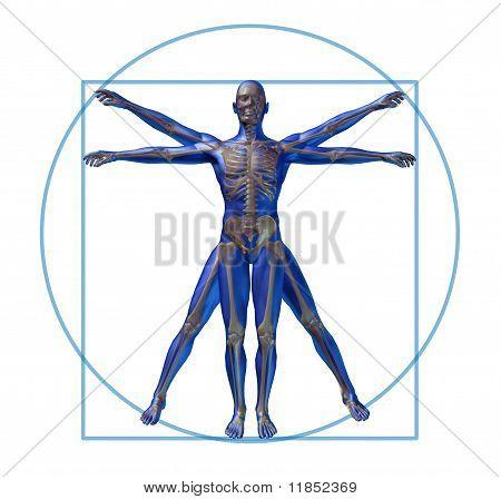 vitruvian man modern skeleton isolated x-ray medical