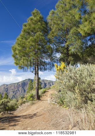 Gran Canaria, Caldera De Tejeda In February