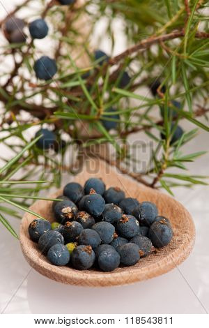 Branch Of Conifers Junipers And Wooden Spoon Ful Of Blue Berries.