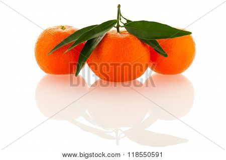 Fresh Unpeeled Orange Mandarin Citrus With Green Leafs Isolated Over White Background.