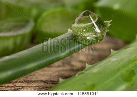 Transparent Drop Of Aloe Vera Gel On A Tip Of Green Fresh Aloe Vera Leaf.