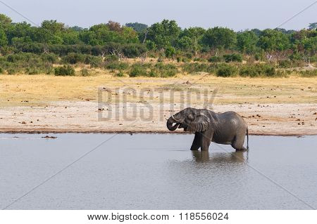 Elephants And Bathing Drinking At Waterhole