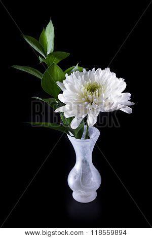 Macro Of A White Chrysanthemum