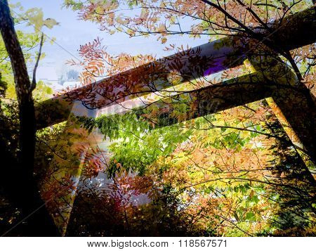 Torii Gate With Autumn Background