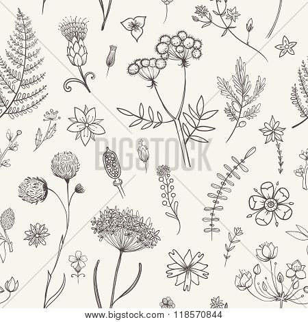 Herbs And Wild Flowers. Botany Pattern