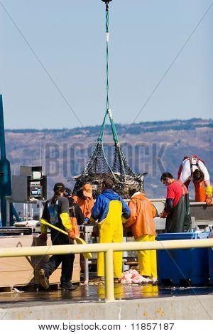 Fischer mit einem Gewicht von den Fang auf Homer, Alaska-Hafen
