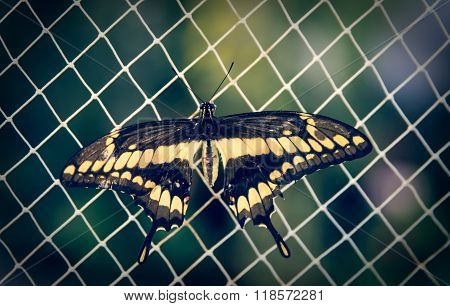 Beautiful Butterfly Sits On A Grid
