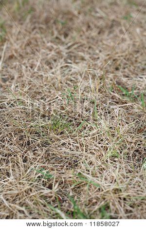 Dead Lawn