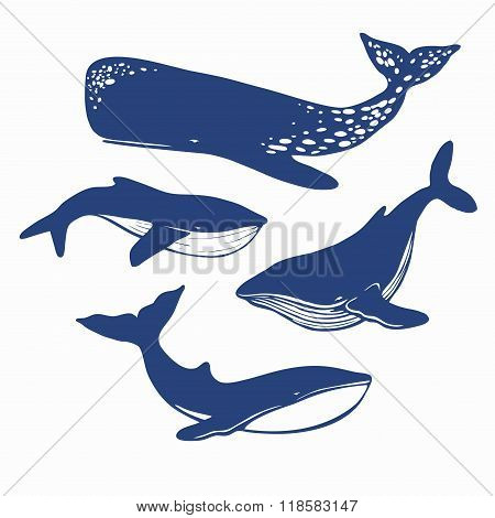 different whales isolated on white