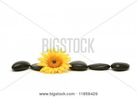 Massage stones and daisy on white background