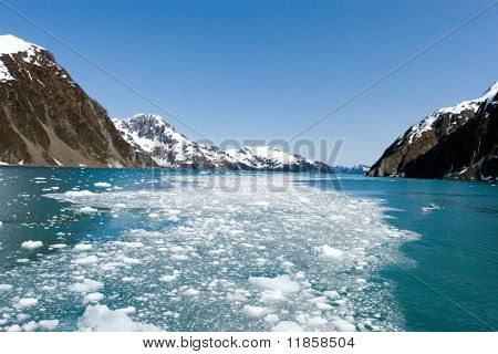 Glacier pieces swimming in the ocean in Alaska Kenai National Park