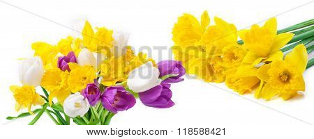 Daffodils And Tulips, Isolated