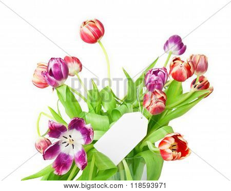 Tulips With Blank Card