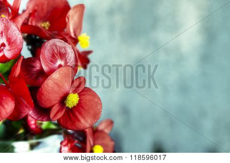 Red Flowers And Grey Wood
