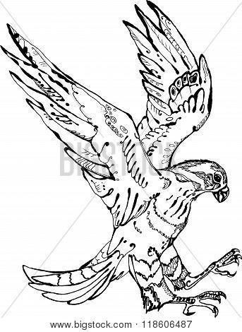 Flying accipiter