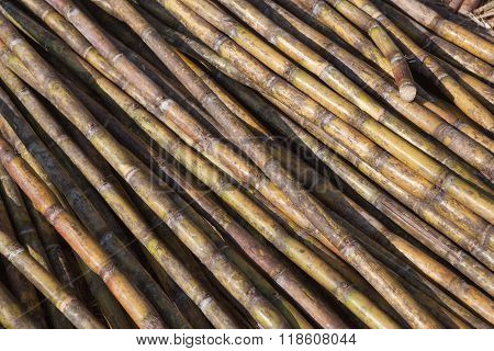 Sugar cane background