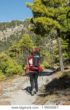 Yount femela trekker on her way through mountain forest.