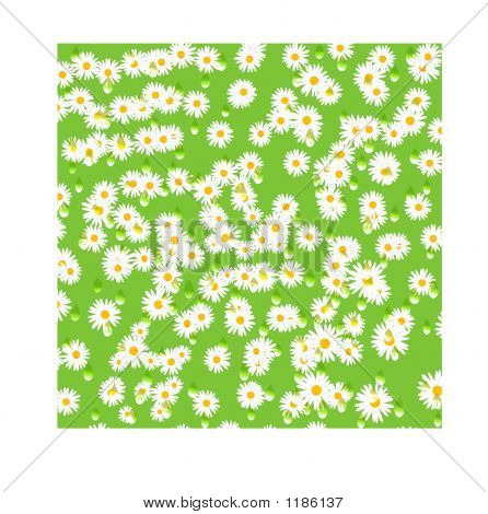Daisies With Water Drops - Computer Generated Illustration