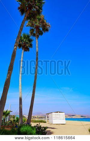Costa Calma beach of Jandia Fuerteventura palm trees  Canary Islands