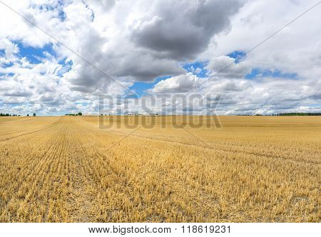 Large stubble field with low clouds