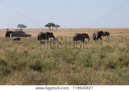 An Elephant Family Walking Across The Savannah
