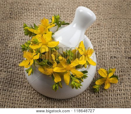 Fresh yellow flowers of medicinal plant St. John's Wort in mortar with pestle,  burlap background