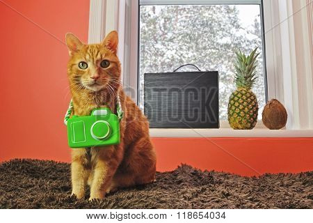 Cat With Camera Ready For A Tropical Vacation