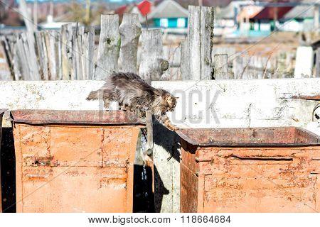 Stray Cat In The Trash