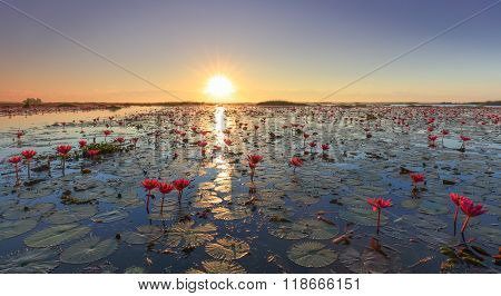 The Sea Of Red Lotus, Udon Thani, Thailand