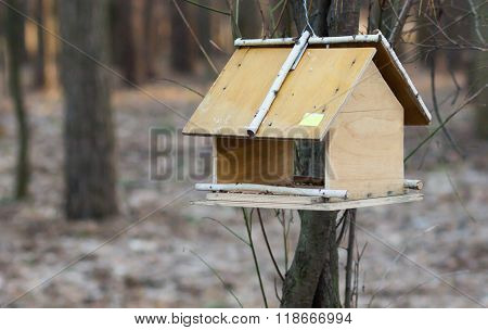 Trough for birds on a tree