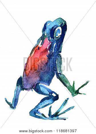 Frog Aquarelle
