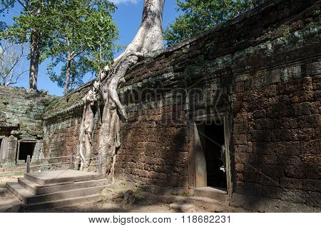 Roots Of A Spung On A Temple In Ta Prohm