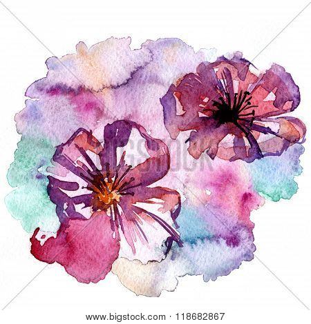 Pleasing Flower Blossoms Aquarelle