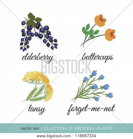 Collection of medicinal plants
