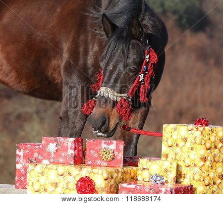 Beautiful Horse With Christmas Gifts