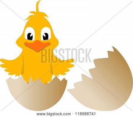 Easter Chick And Broken Egg