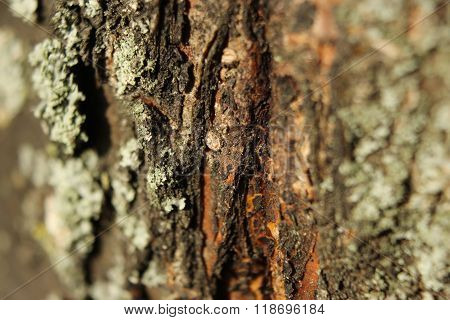 Disputes Of A Fungus On Tree Bark